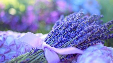 Lavendel Duft: Lavendelsträucher zusammengebunden