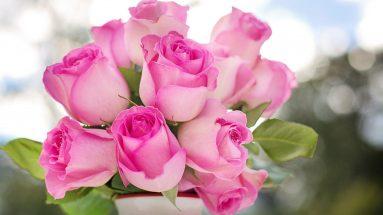Rosen Duft: Strauß rosa Rosen in Vase